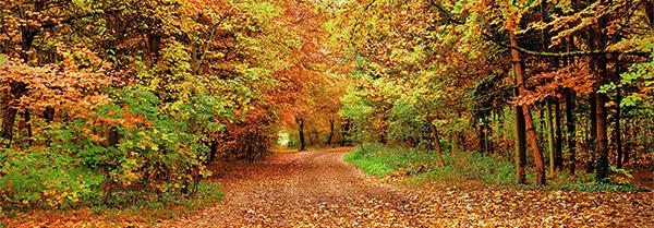 le 11 novembre au bois de Vincennes