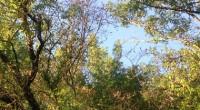 Dimanche 21 février au Parc Floral du bois de Vincennes de 10h à 12h30. Au programme : marche et pratique du Qi gong (automassage, mouvements, respiration…). Nous pratiquerons le Qi […]